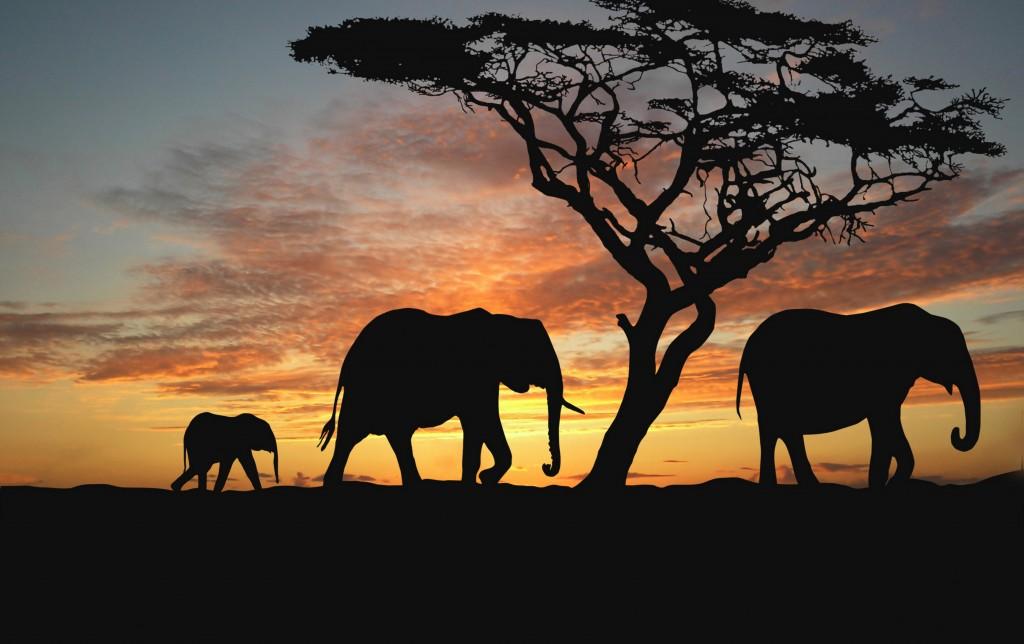 L'éléphant : emblème de la Côte d'Ivoire  © https://animal-kid.com/